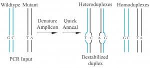 HRMA-duplexes-300x137