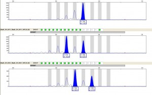 str-genotyping-cropped