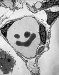 UofU RMF Smiley Face