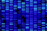 highthroughputgenomics-mn